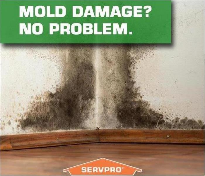 Mold Remediation Early Detection of Mold in your home